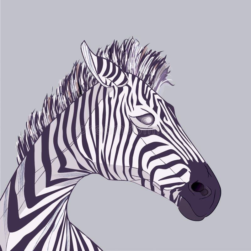 Cabeça da zebra ilustração royalty free