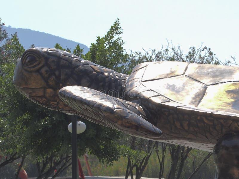Cabeça Dalyan Turquia da tartaruga fotos de stock