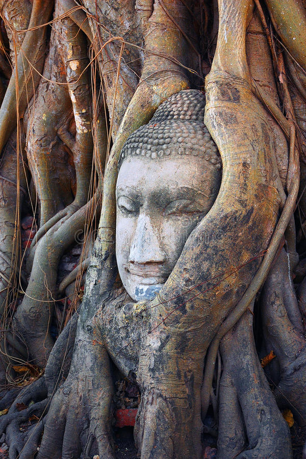 Cabeça de Buddha fotos de stock royalty free