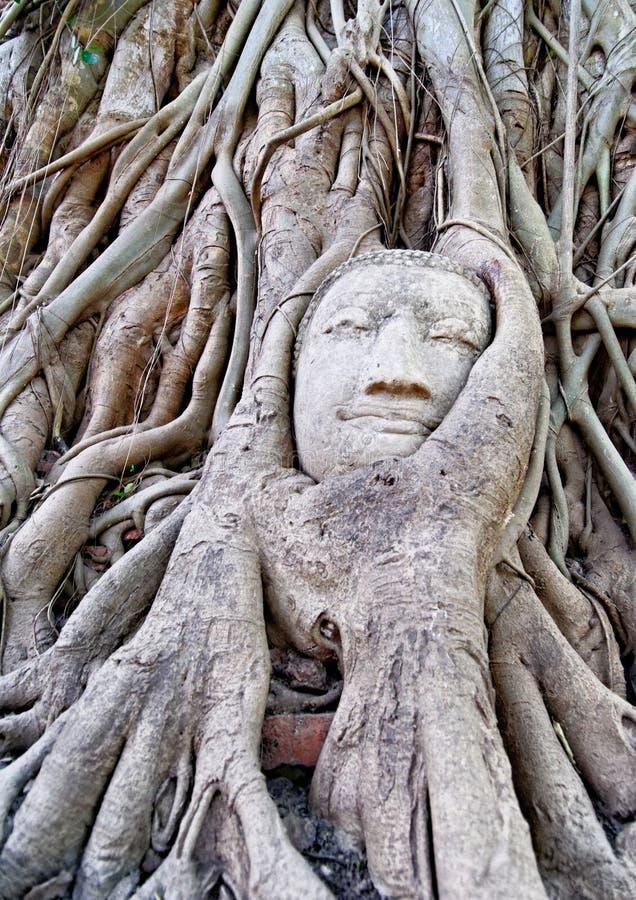 Cabeça de Buddha sob raizes da árvore imagens de stock royalty free