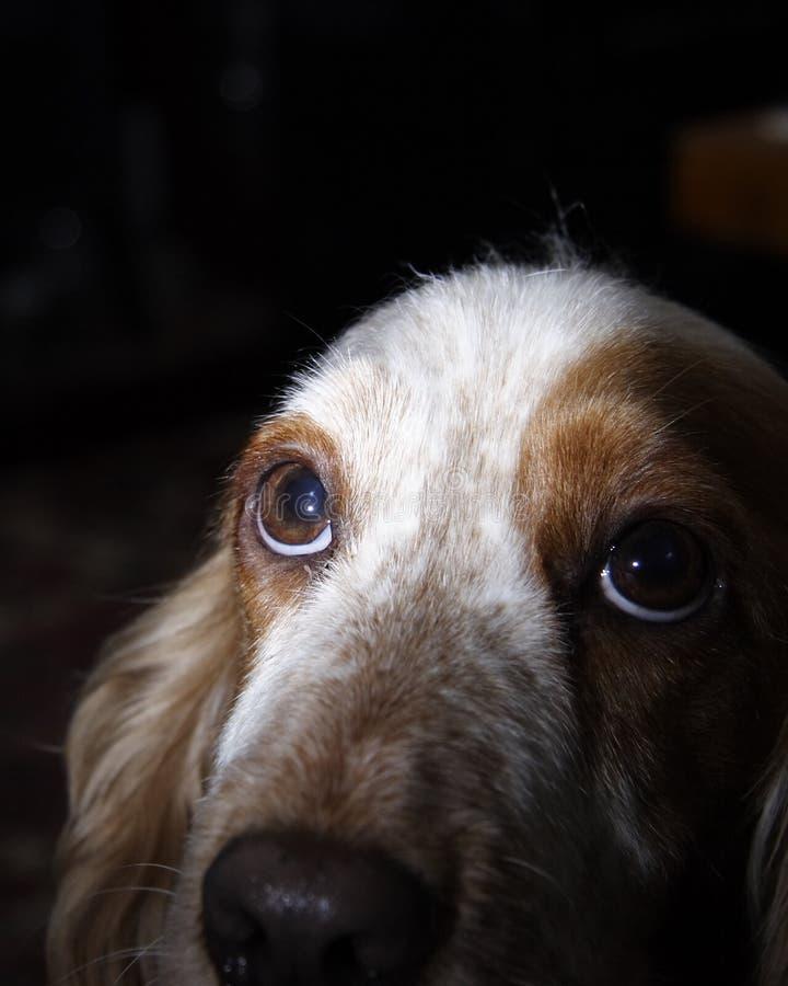 Cabeça de cães imagens de stock royalty free