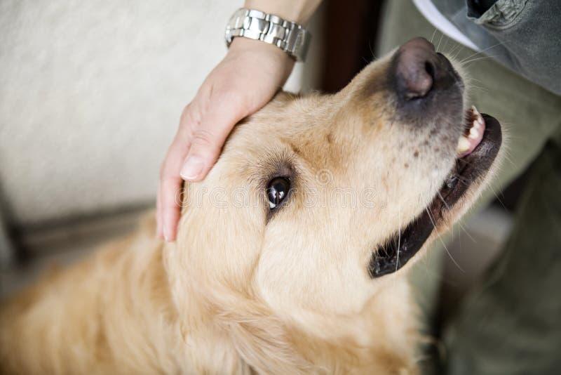 Cabeça de cão de acariciamento da mão imagem de stock