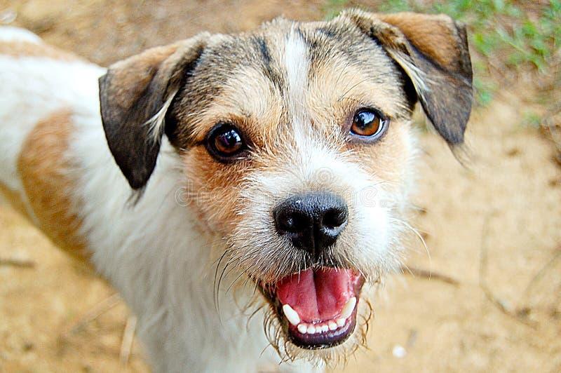 Cabeça de cão do close-up fotos de stock