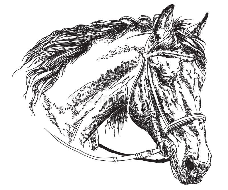 Cabeça de cavalo com ilustração do desenho da mão do vetor do freio ilustração stock