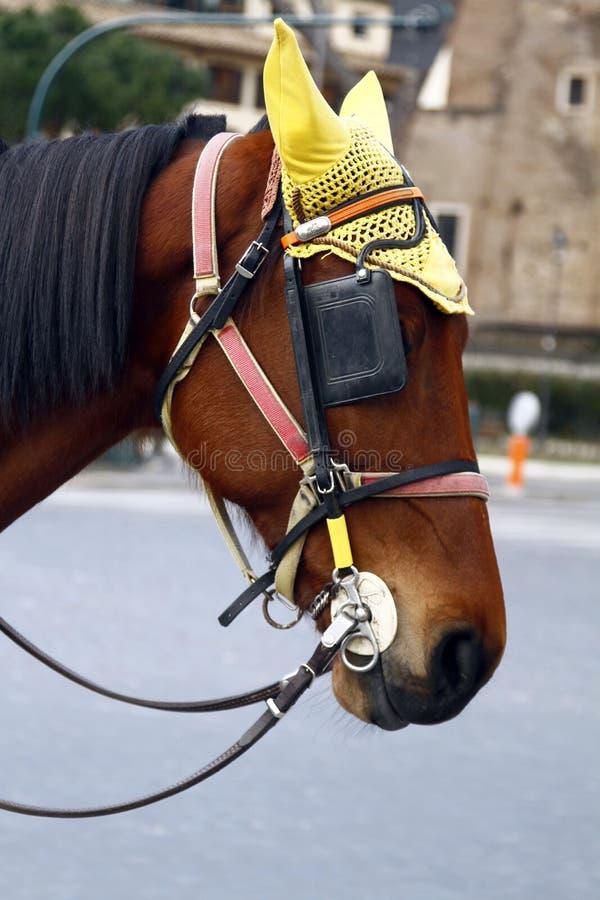 cabeça de cavalo com proteção de orelha fotos de stock royalty free