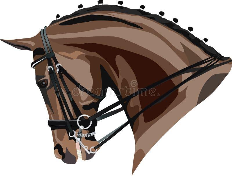 Cabeça de cavalo do Dressage ilustração royalty free