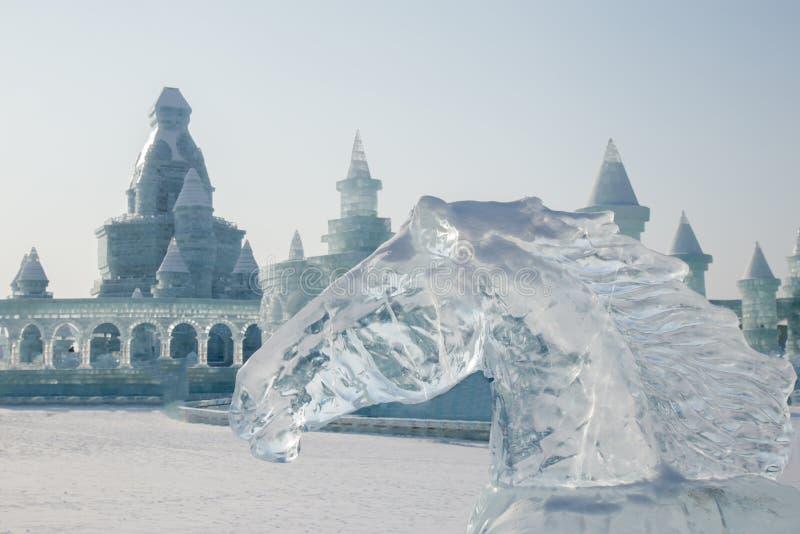 Cabeça de cavalo feita do gelo imagem de stock royalty free