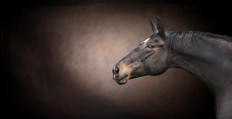 Cabeça de cavalo preta bonita no fundo escuro imagem de stock