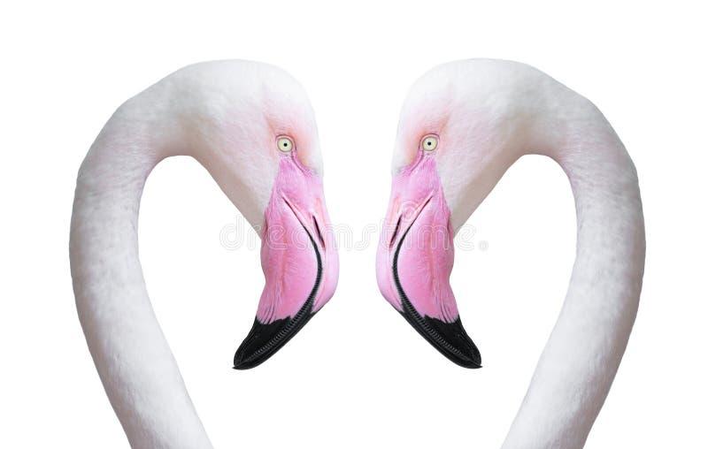 Cabeça de dois flamingos fotos de stock royalty free
