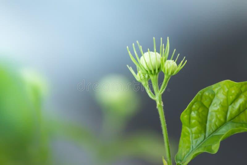 A cabeça de flor no fundo da natureza foto de stock royalty free