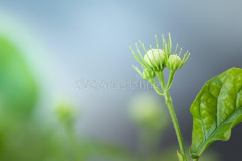A cabeça de flor no fundo do sumário da natureza foto de stock