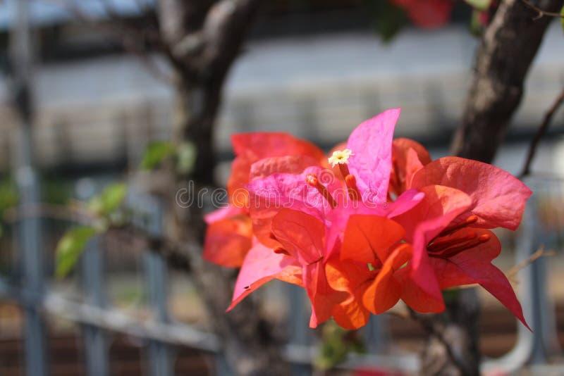 Cabeça de flores em Daylight foto de stock royalty free
