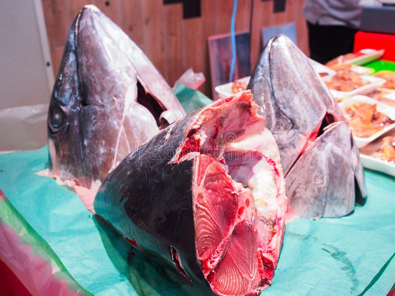 Cabeça de peixes de atum fotografia de stock royalty free