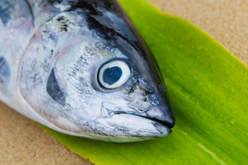 Cabeça de peixes de atum imagem de stock royalty free