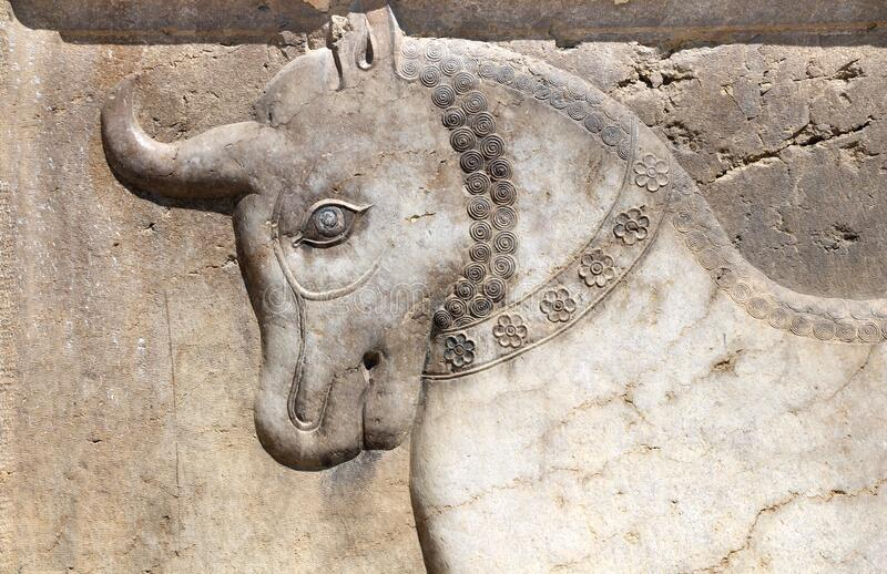 Cabeça de touro de sopro de sopro, Shiraz, Irã imagem de stock royalty free