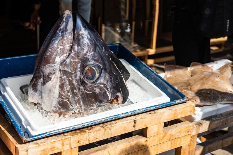 Cabeça de Tuna Is On The Box do gelo imagens de stock royalty free