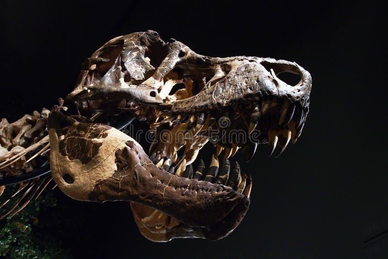 Cabeça de um dinossauro foto de stock