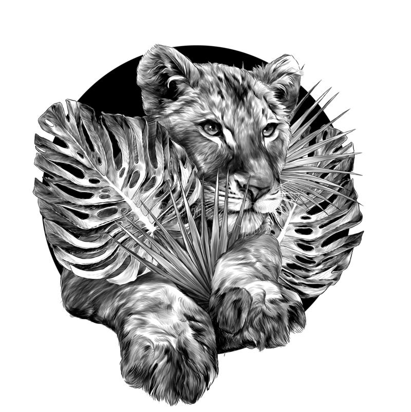 A cabeça de um filhote de leão pequeno cercou por plantas tropicais e sae da composição ilustração stock