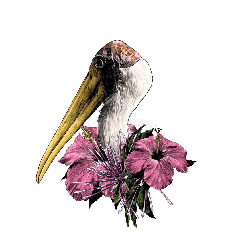 A cabeça de uma cegonha lateralmente no perfil ilustração do vetor