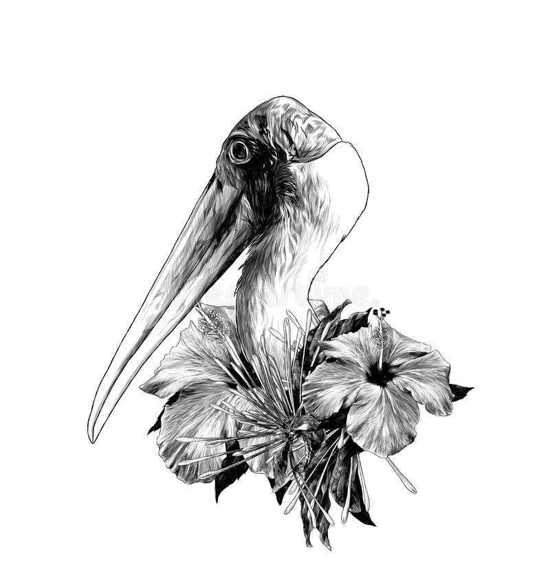 A cabeça de uma cegonha lateralmente no perfil ilustração royalty free