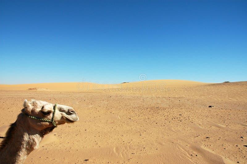 Download Cabeça do camelo imagem de stock. Imagem de tourism, curso - 112783