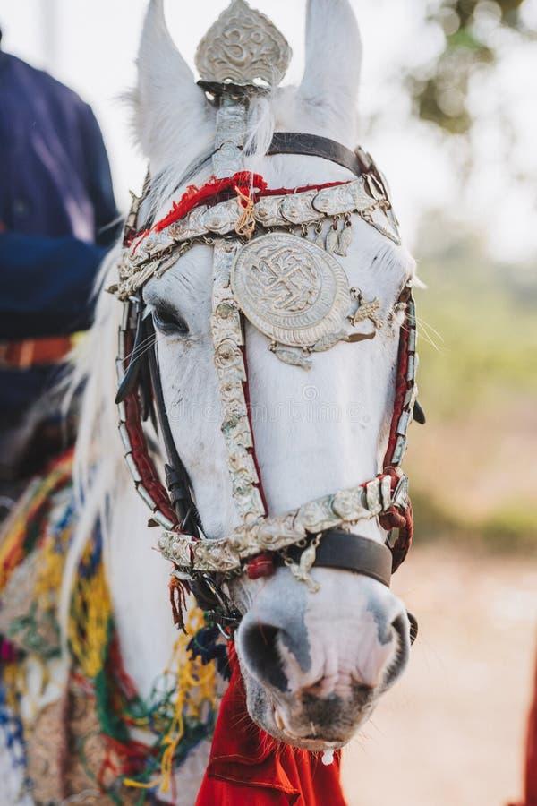 Cabeça do cavalo indiano coloridamente decorado em Jaisalmer, Rajastha imagens de stock