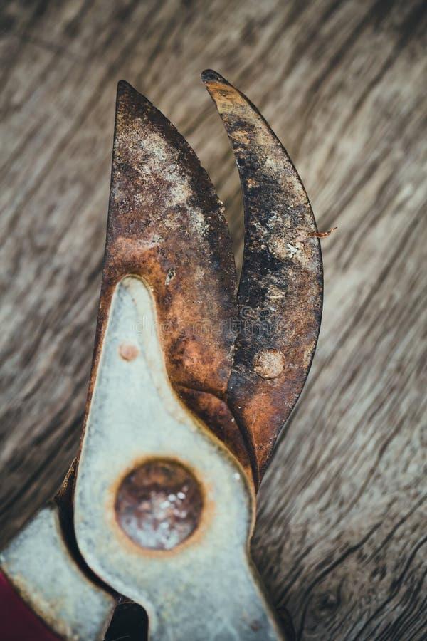 Cabeça do close up da tesoura de podar manual, ferramenta oxidada velha fotos de stock royalty free