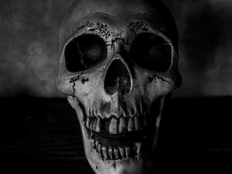 Cabeça do crânio fotografia de stock royalty free