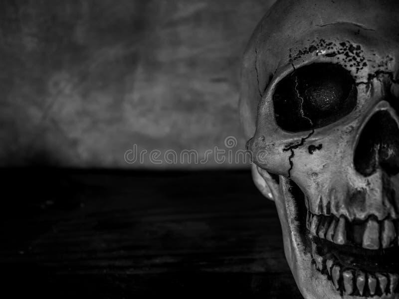 Cabeça do crânio fotografia de stock