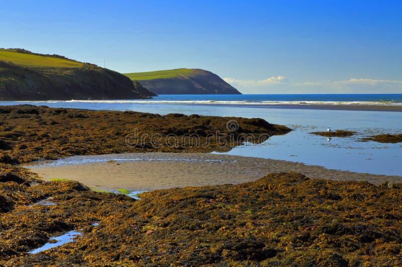 Cabeça do Dinas das areias de Newport fotografia de stock royalty free