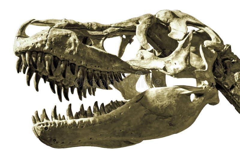 Cabeça do dinossauro foto de stock royalty free