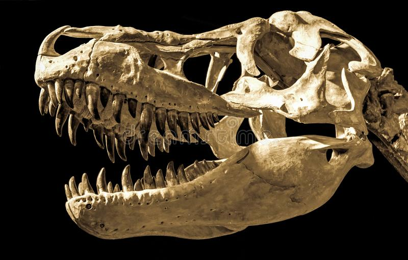 Cabeça do dinossauro imagens de stock royalty free