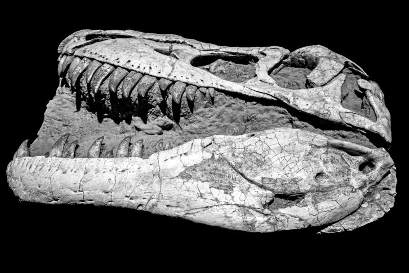 Cabeça do dinossauro fotos de stock