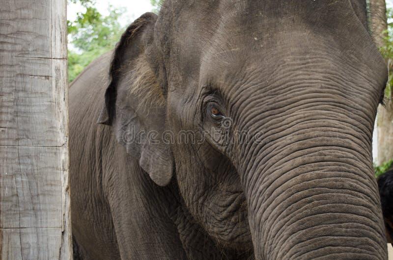 Cabeça do elefante fotografia de stock