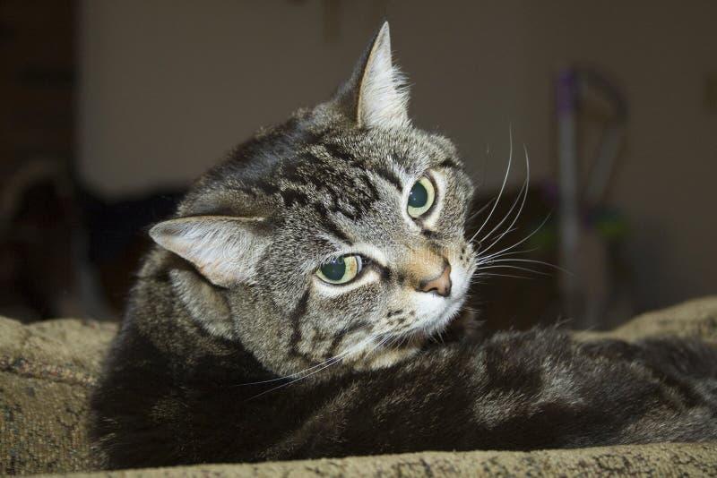 Cabeça do gato armada fotos de stock royalty free