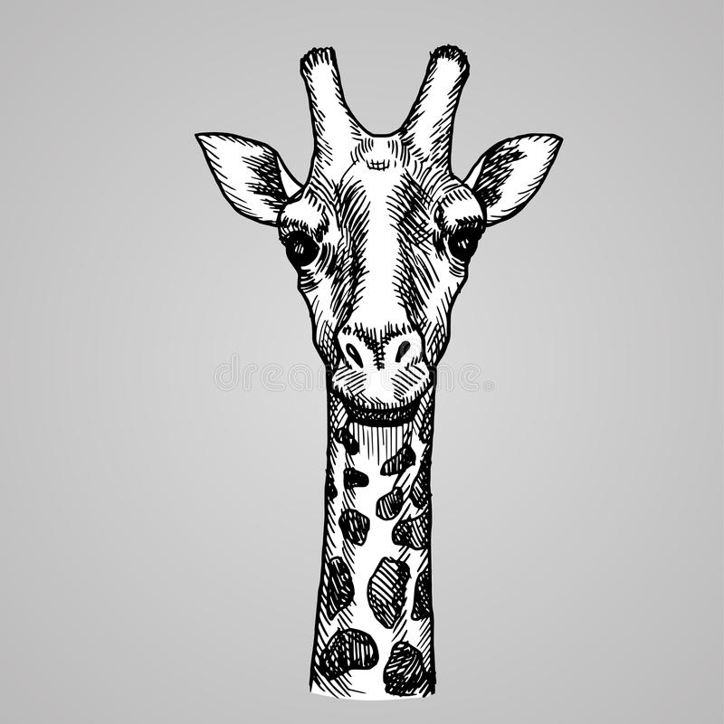Cabeça do girafa do estilo da gravura Animal branco africano no estilo do esboço Ilustração do vetor ilustração do vetor