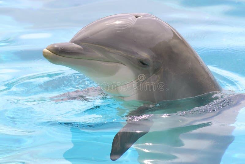 Cabeça do golfinho fotos de stock royalty free