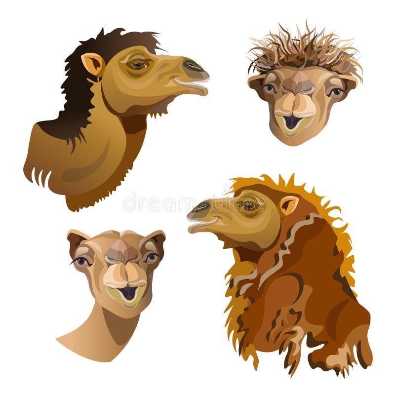 Cabeça do grupo do camelo ilustração royalty free