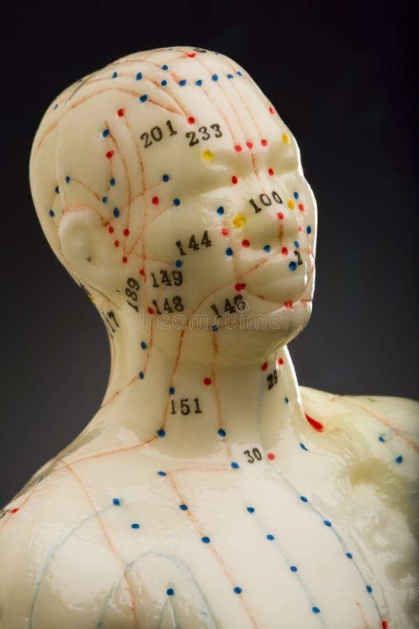 Cabeça do mannequin da acupunctura fotos de stock royalty free