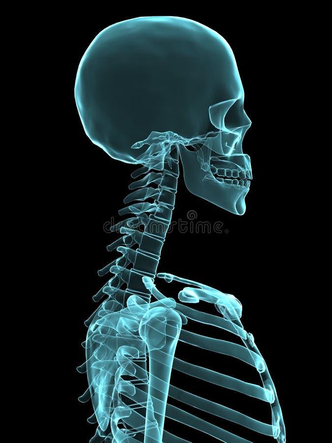 Cabeça do raio X ilustração do vetor