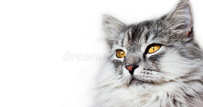 Cabeça dos gatos imagem de stock