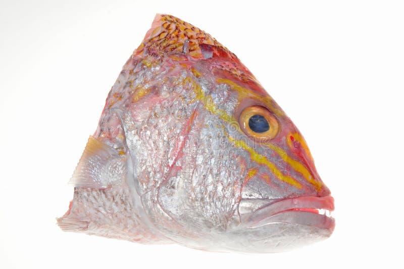 Cabeça dos peixes foto de stock