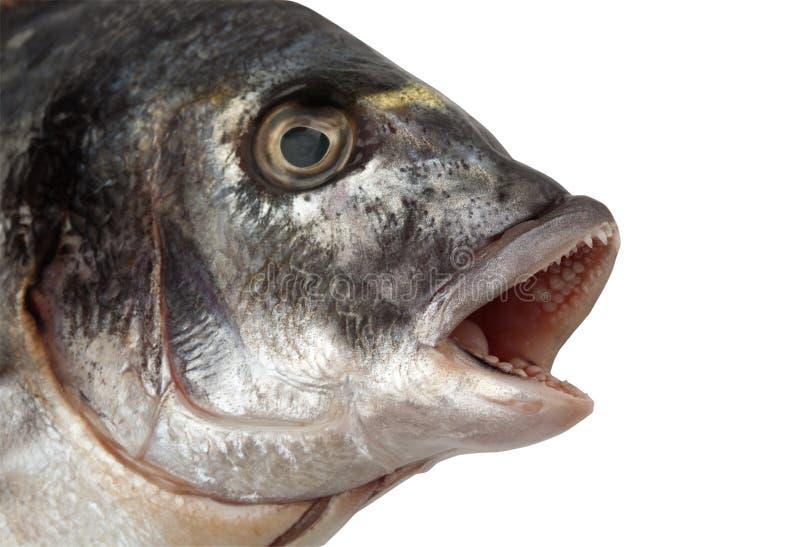 Cabeça dos peixes imagens de stock