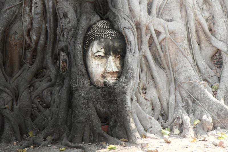 A cabeça famosa do Ayutthaya-estilo da areia-pedra da imagem da Buda mim fotografia de stock royalty free