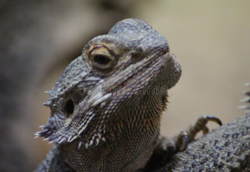 Cabeça farpada do dragão fotos de stock