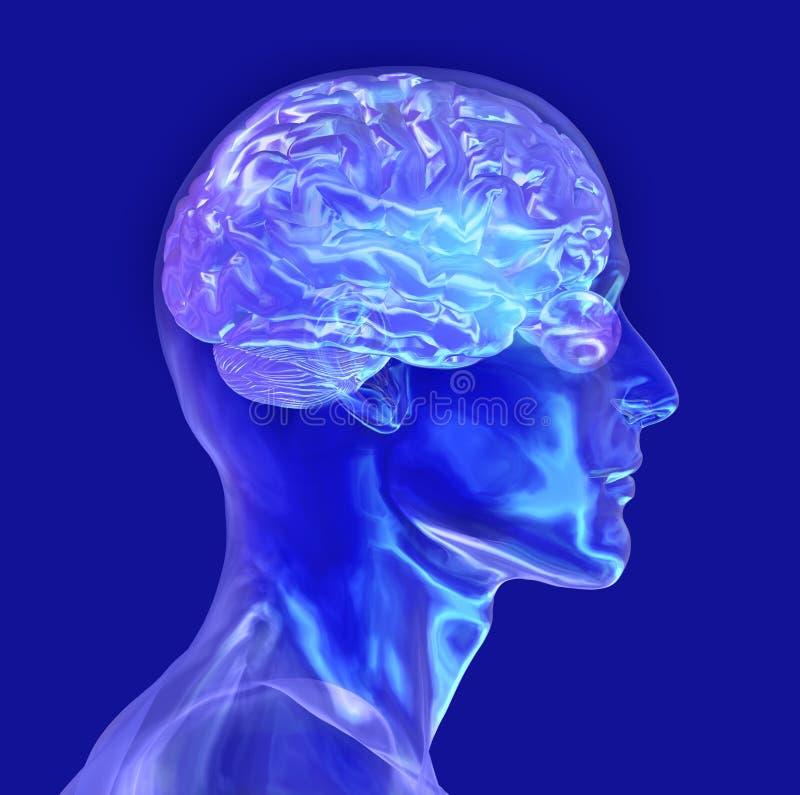 A cabeça masculina de vidro com cérebro - inclui o trajeto de grampeamento ilustração royalty free