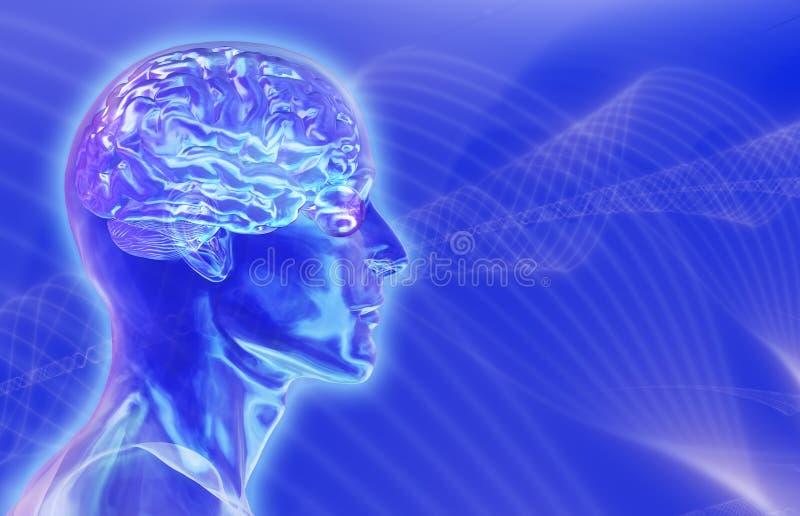 Cabeça masculina de vidro com o cérebro no fundo dos Brainwaves ilustração do vetor
