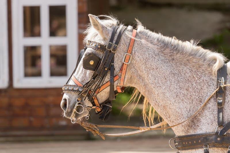 Cabeçadas e antolhos vestindo do cavalo em um rancho imagens de stock royalty free
