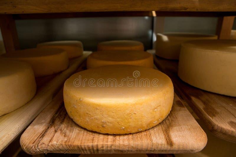 cabeças do queijo no cofre-forte nas prateleiras imagens de stock