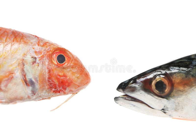 Cabeças do salmonete vermelho e do makerel foto de stock royalty free